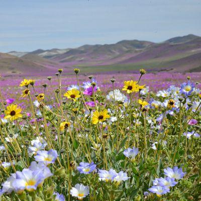 Spring Flower Mountain Bike Trail