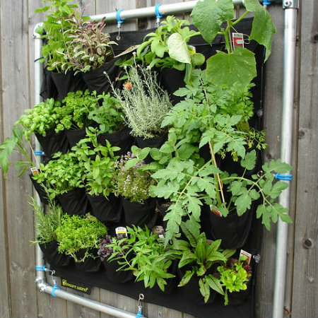 Gardening for Life – a young father's work and dreams