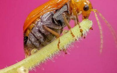 Biodiversity in the Garden – Getting Bugged
