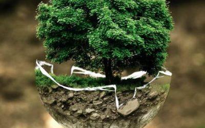 Social Justice and Environmentalism Walk into a Bar…