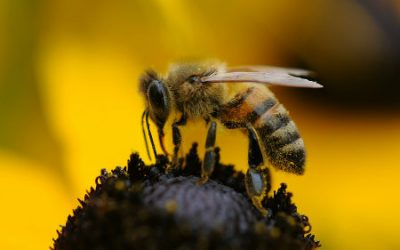 On Reviving Bees