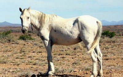 Namaqualand Farmers Adapting to Climate Change?