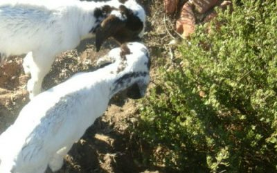 BRK Land & Livestock Adaptation Project